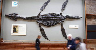 اپلیکیشن Google Art & Calture کلکسیون حیات وحش و دایناسورها بصورت واقعیت افزوده یا همان VR است و همچنین 300000 تصویر از موزه های آثار هنری معاصر و گذشته